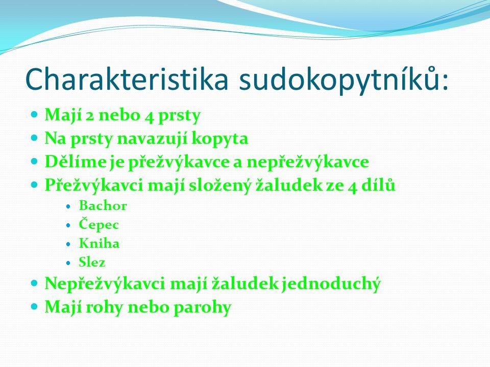 Charakteristika sudokopytníků: