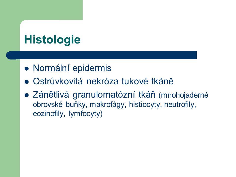 Histologie Normální epidermis Ostrůvkovitá nekróza tukové tkáně