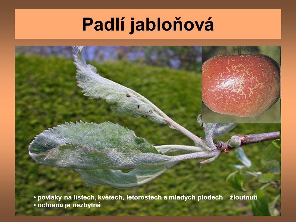 Padlí jabloňová • povlaky na listech, květech, letorostech a mladých plodech – žloutnutí.