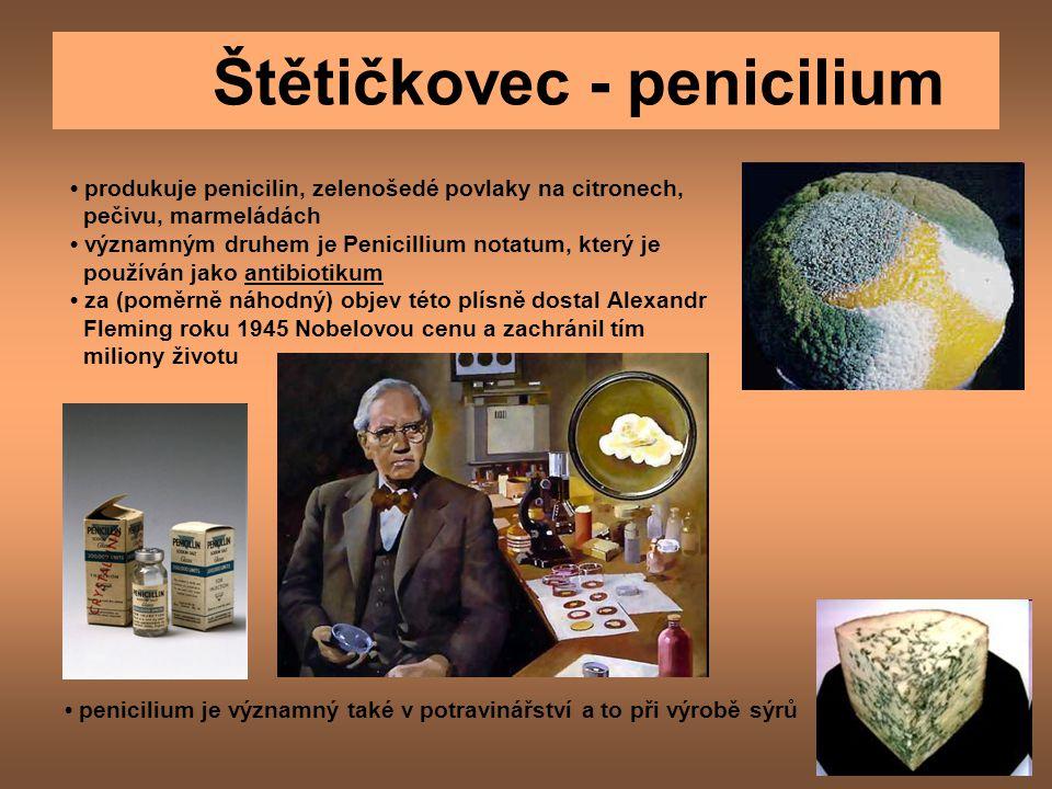 Štětičkovec - penicilium