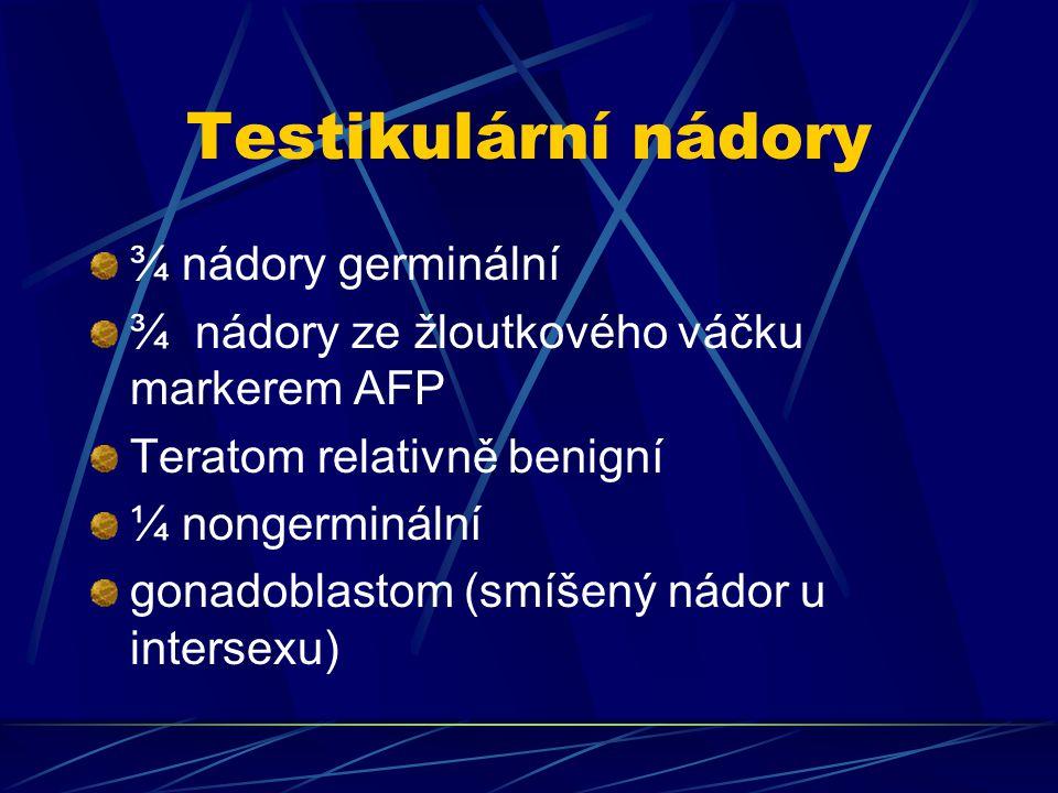 Testikulární nádory ¾ nádory germinální