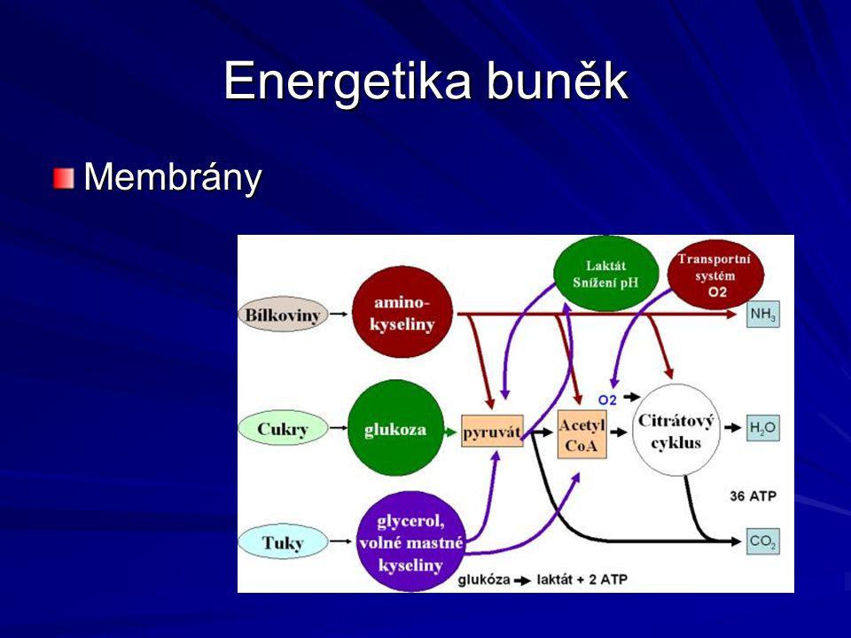 Energetika buněk Membrány