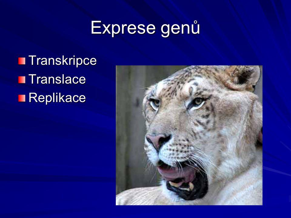Exprese genů Transkripce Translace Replikace