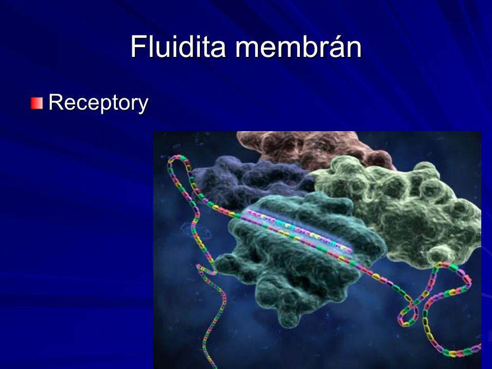 Fluidita membrán Receptory