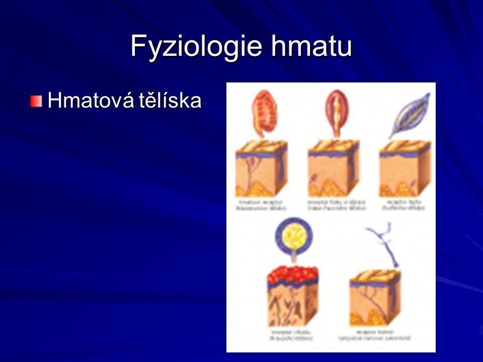 Fyziologie hmatu Hmatová tělíska