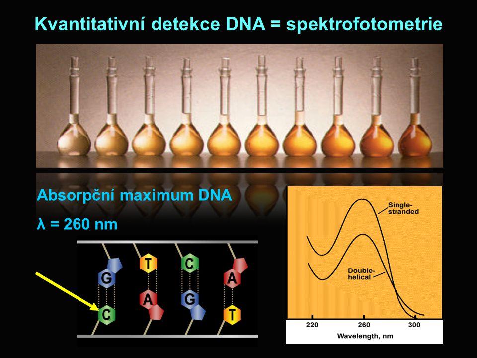Kvantitativní detekce DNA = spektrofotometrie