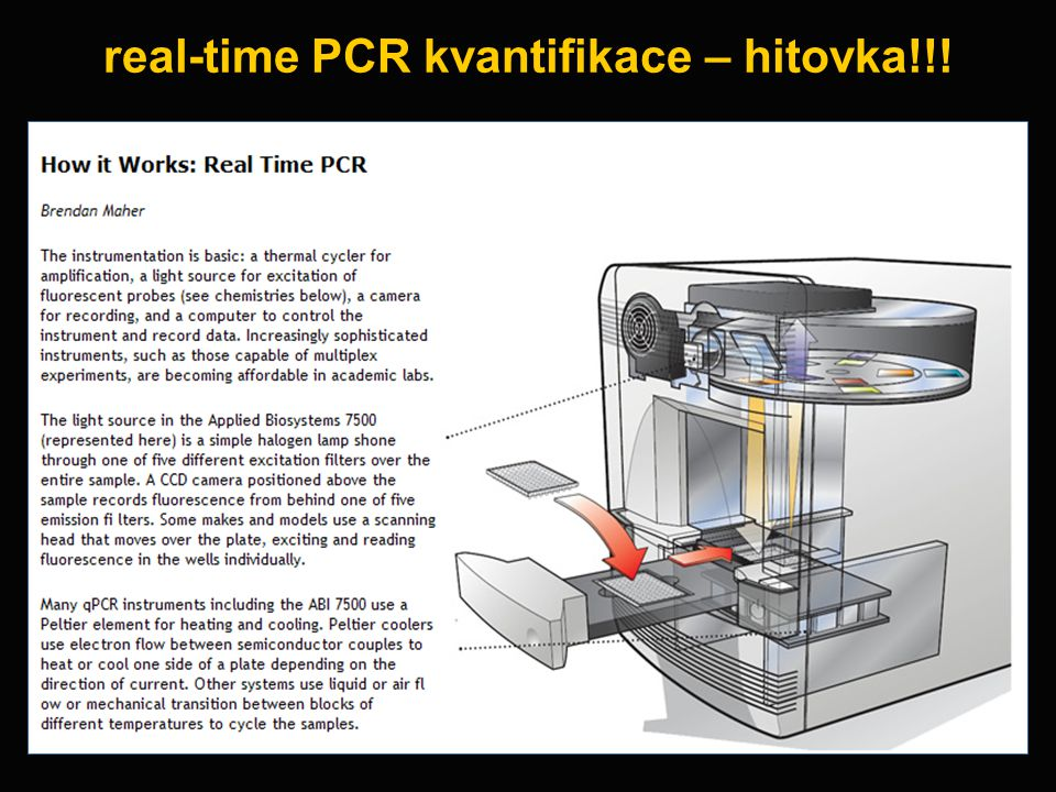 real-time PCR kvantifikace – hitovka!!!