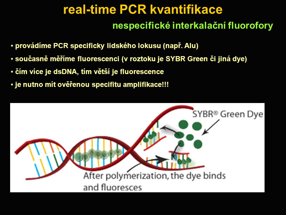 real-time PCR kvantifikace
