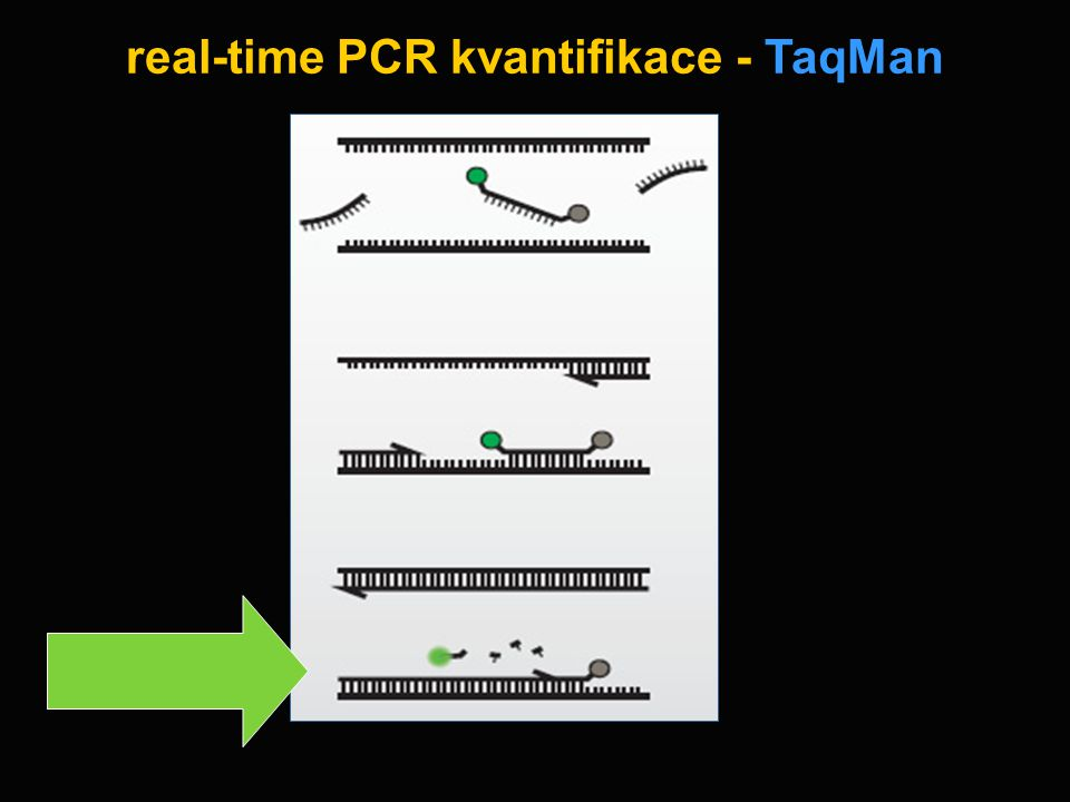 real-time PCR kvantifikace - TaqMan