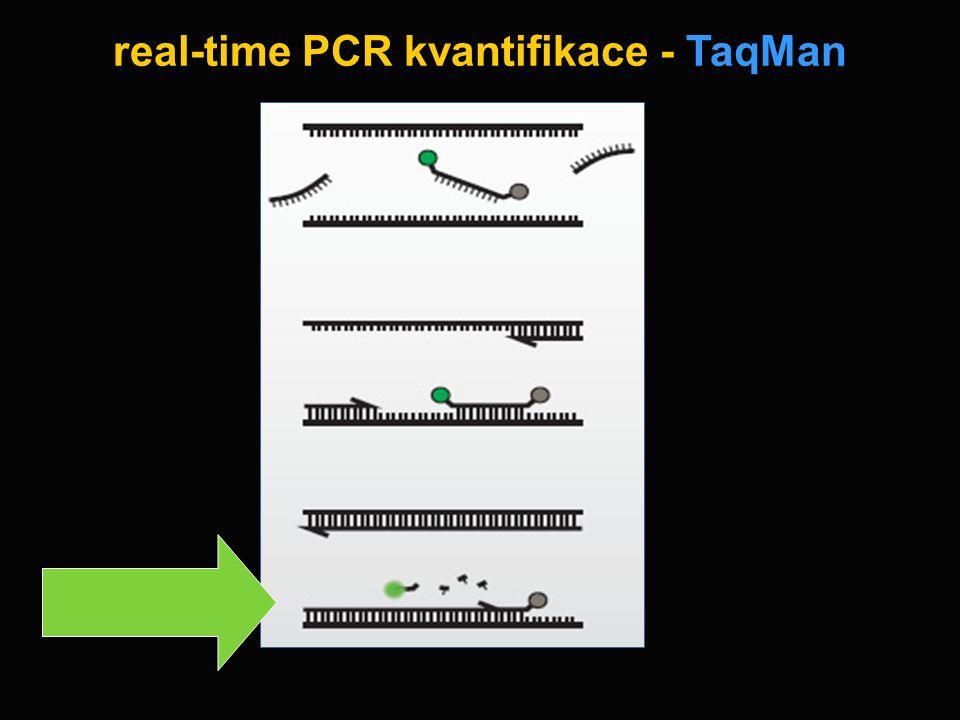 real-time PCR kvantifikace - TaqMan