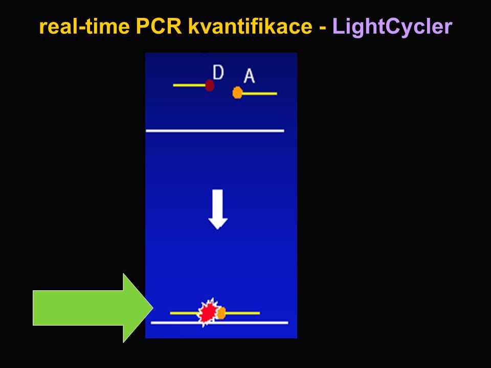 real-time PCR kvantifikace - LightCycler