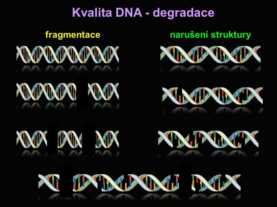 Kvalita DNA - degradace