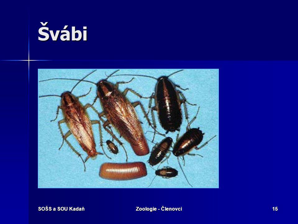 Švábi SOŠS a SOU Kadaň Zoologie - Členovci