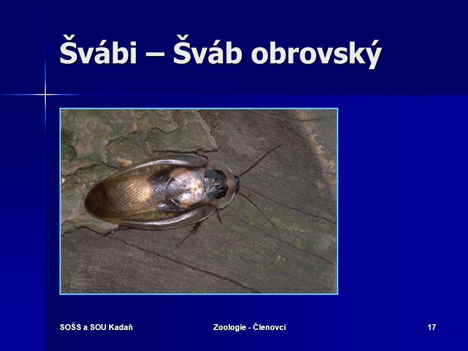 Švábi – Šváb obrovský SOŠS a SOU Kadaň Zoologie - Členovci