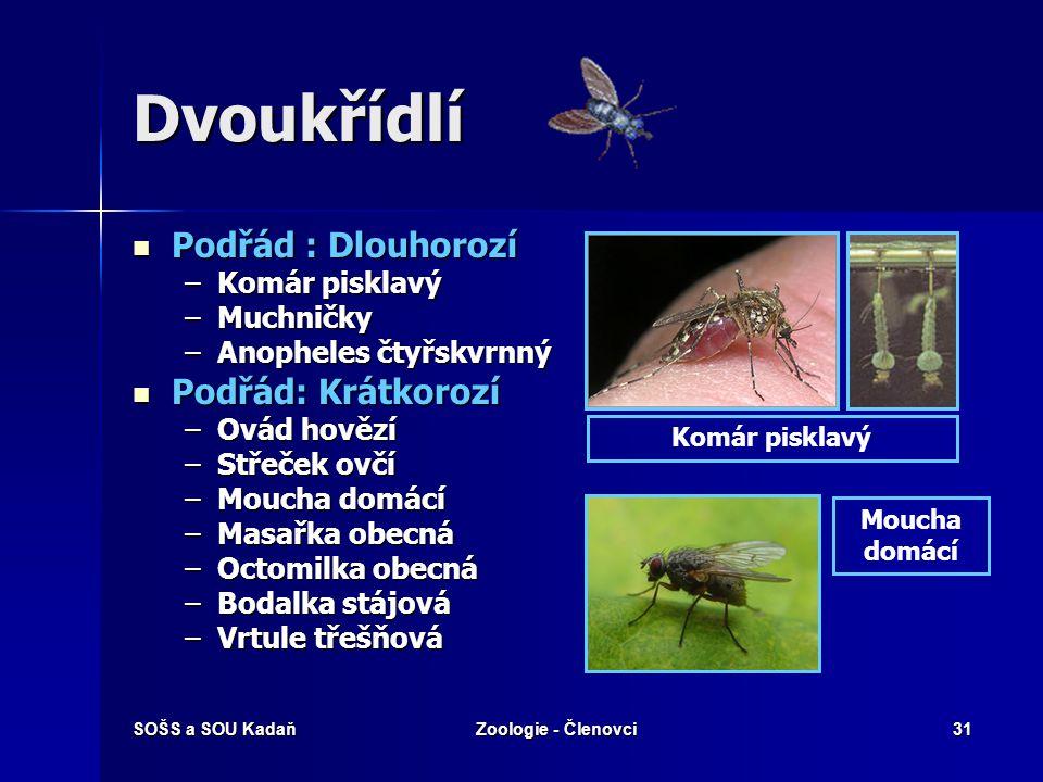 Dvoukřídlí Podřád : Dlouhorozí Podřád: Krátkorozí Komár pisklavý