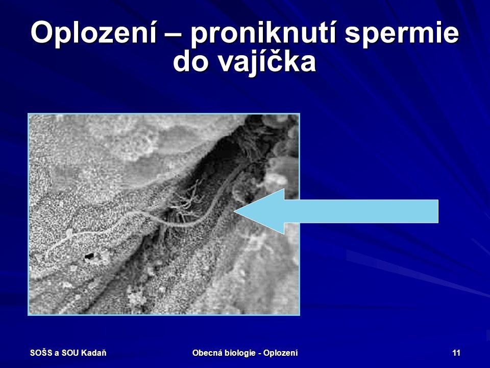 Oplození – proniknutí spermie do vajíčka