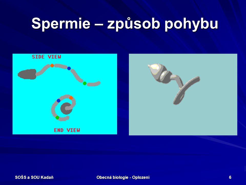 Spermie – způsob pohybu