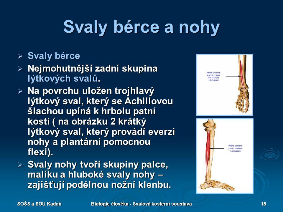Biologie člověka - Svalová kosterní soustava