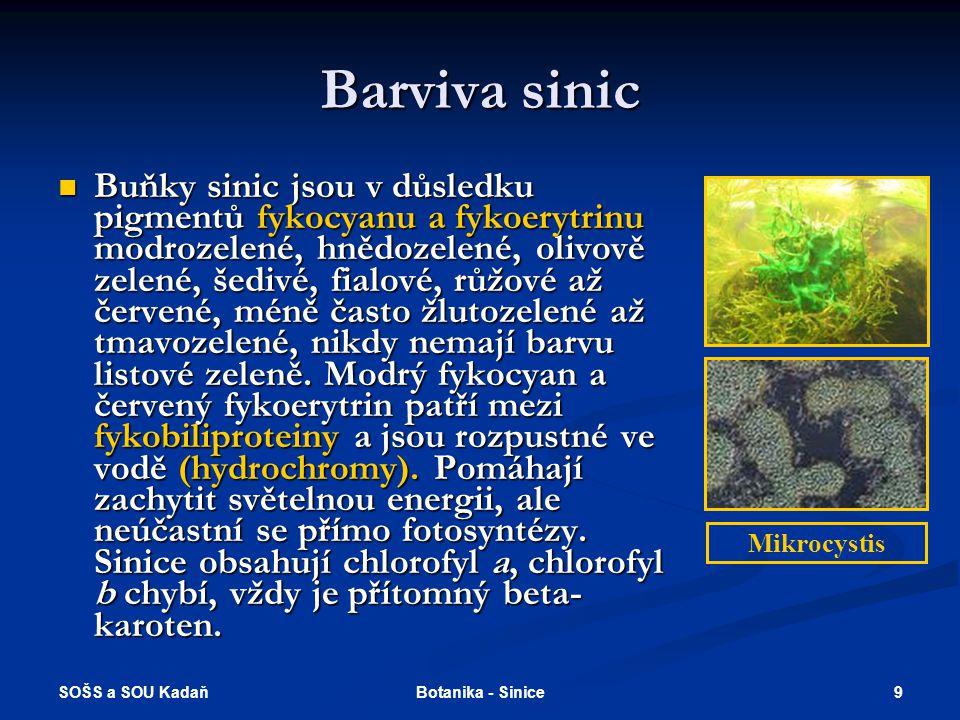 Barviva sinic