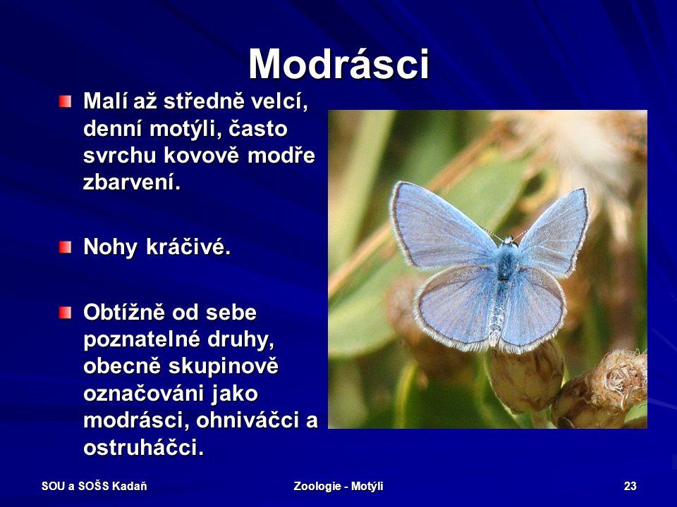 Modrásci Malí až středně velcí, denní motýli, často svrchu kovově modře zbarvení. Nohy kráčivé.