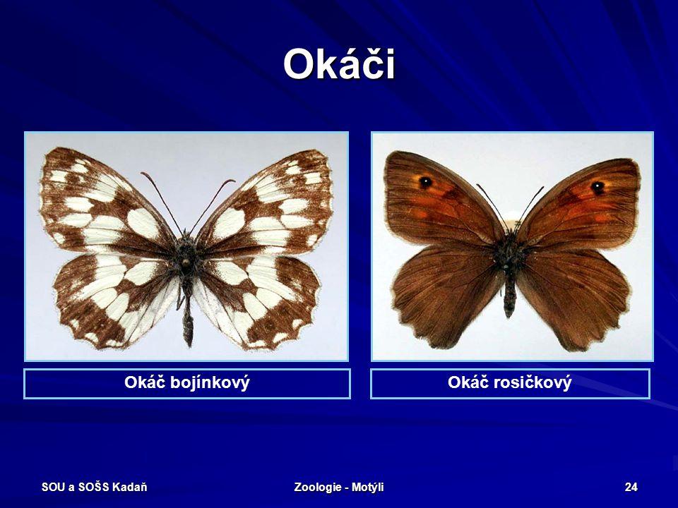 Okáči Okáč bojínkový Okáč rosičkový SOU a SOŠS Kadaň Zoologie - Motýli