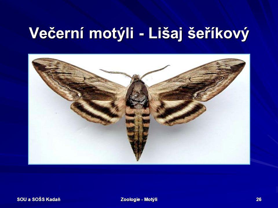 Večerní motýli - Lišaj šeříkový