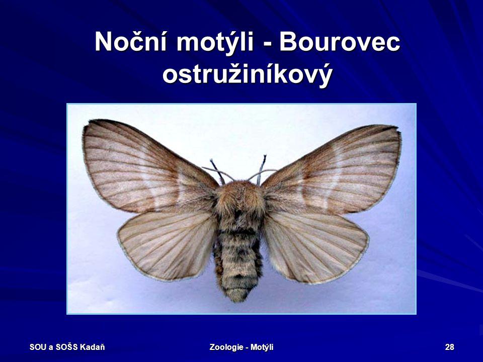 Noční motýli - Bourovec ostružiníkový