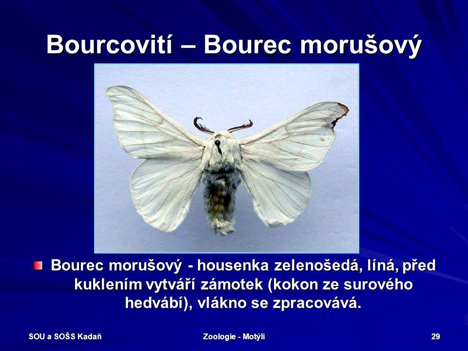 Bourcovití – Bourec morušový