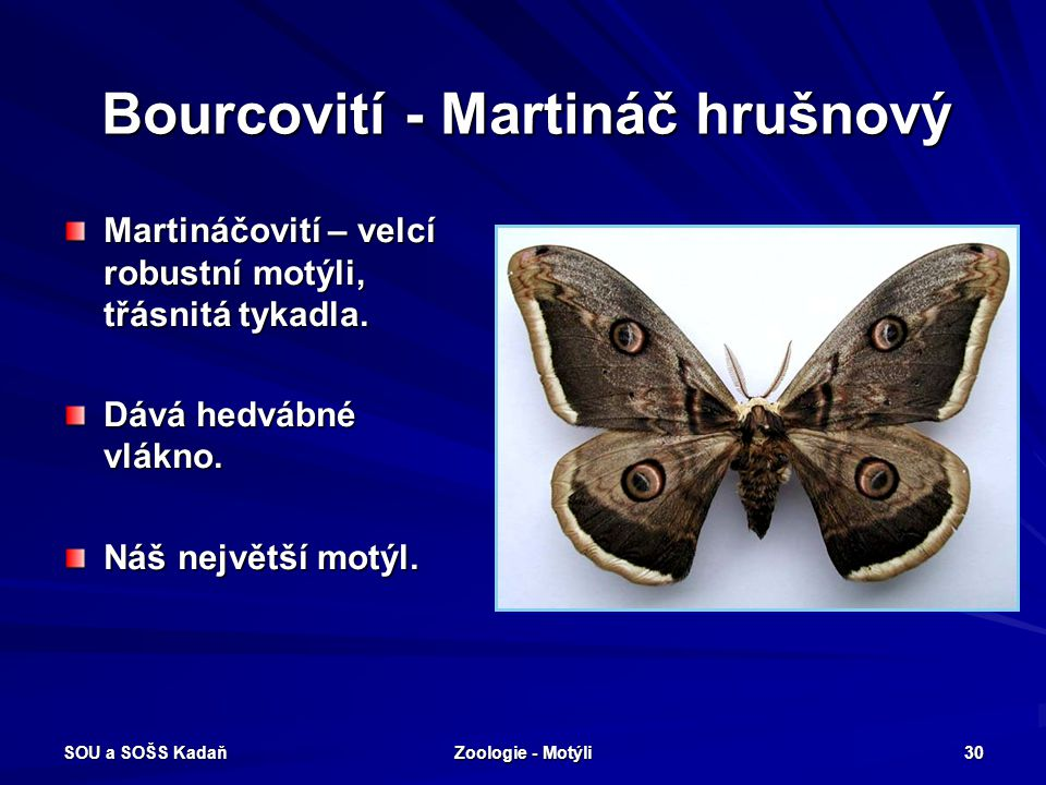 Bourcovití - Martináč hrušnový
