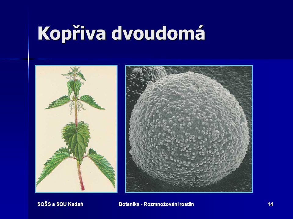 Botanika - Rozmnožování rostlin