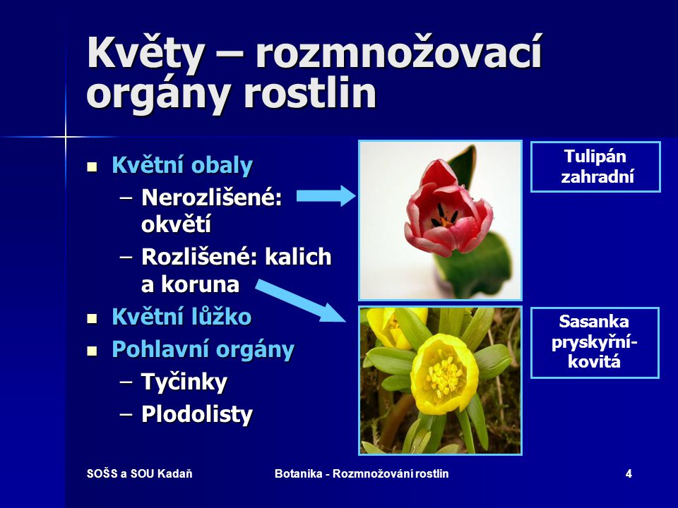 Květy – rozmnožovací orgány rostlin