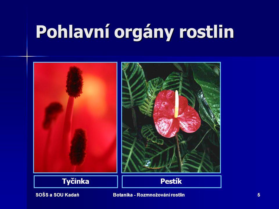 Pohlavní orgány rostlin
