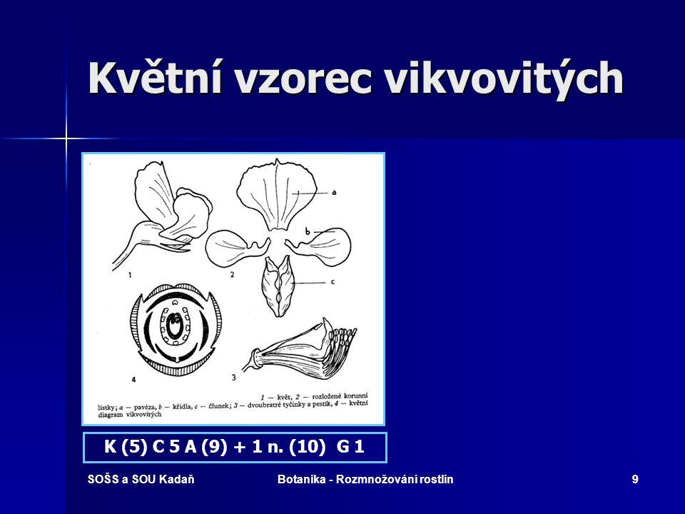 Květní vzorec vikvovitých