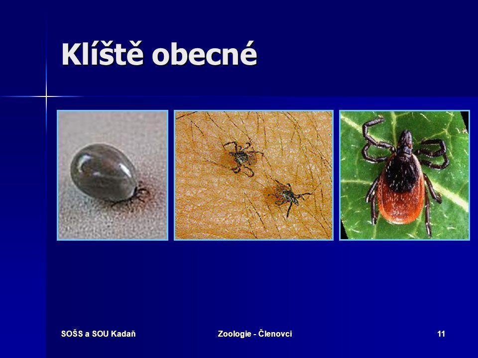 Klíště obecné SOŠS a SOU Kadaň Zoologie - Členovci