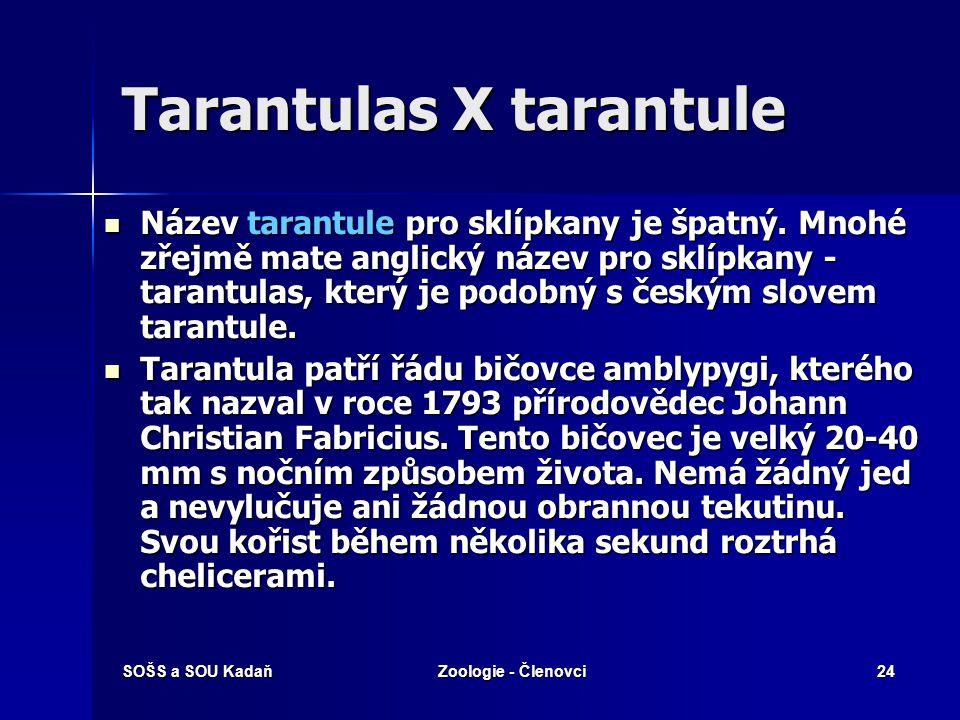 Tarantulas X tarantule