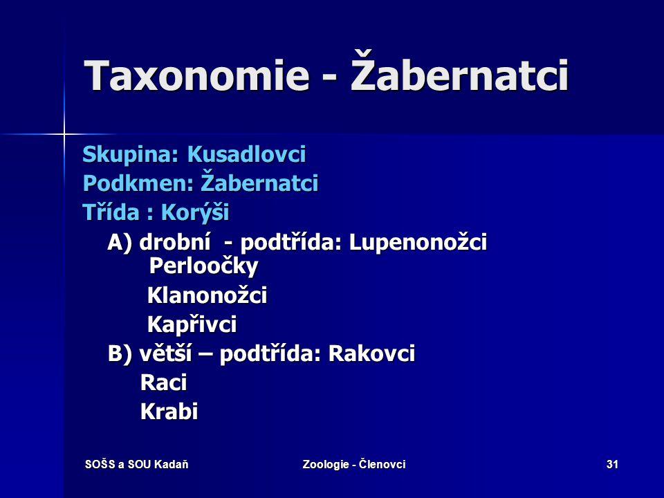 Taxonomie - Žabernatci