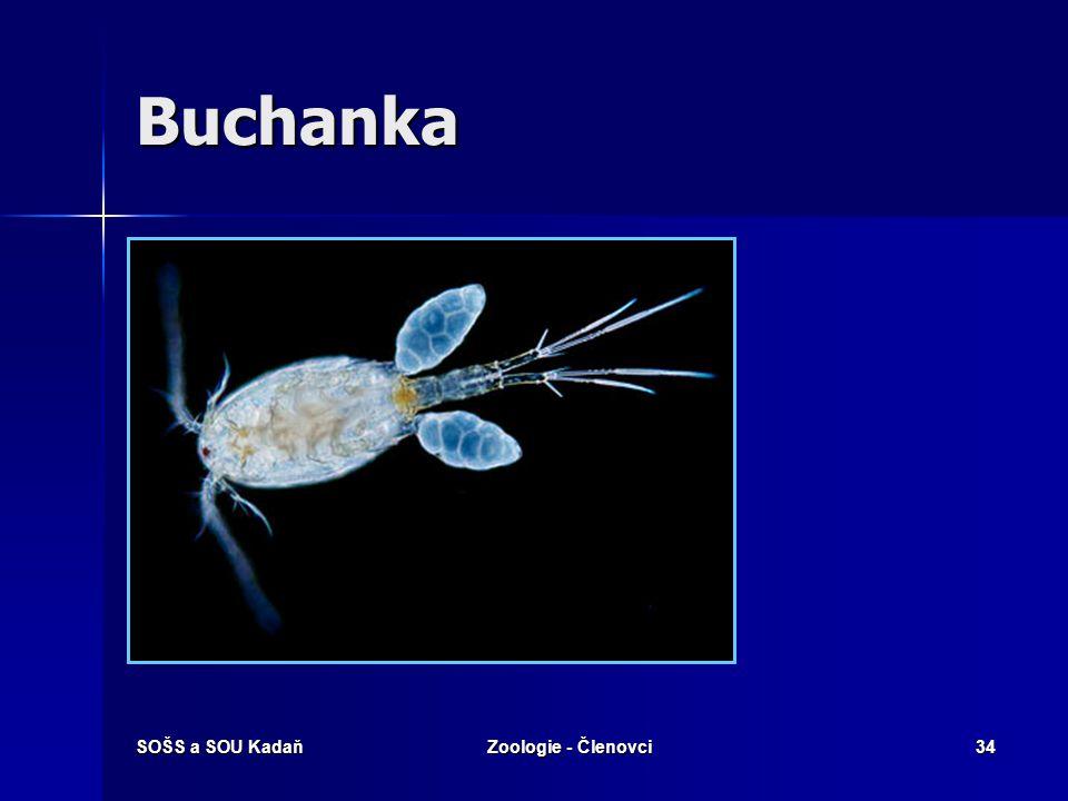 Buchanka SOŠS a SOU Kadaň Zoologie - Členovci