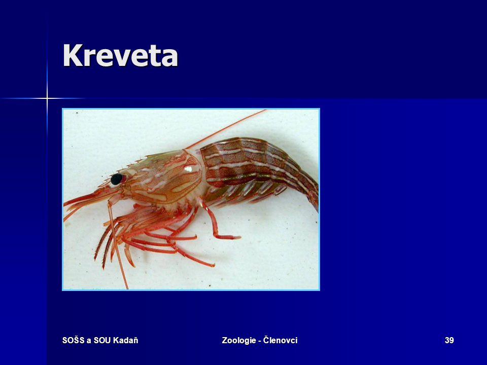 Kreveta SOŠS a SOU Kadaň Zoologie - Členovci