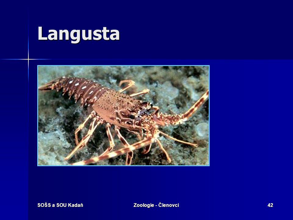 Langusta SOŠS a SOU Kadaň Zoologie - Členovci