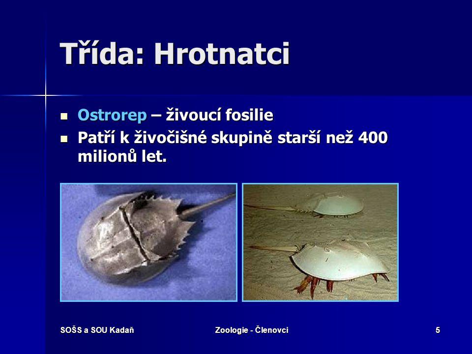 Třída: Hrotnatci Ostrorep – živoucí fosilie