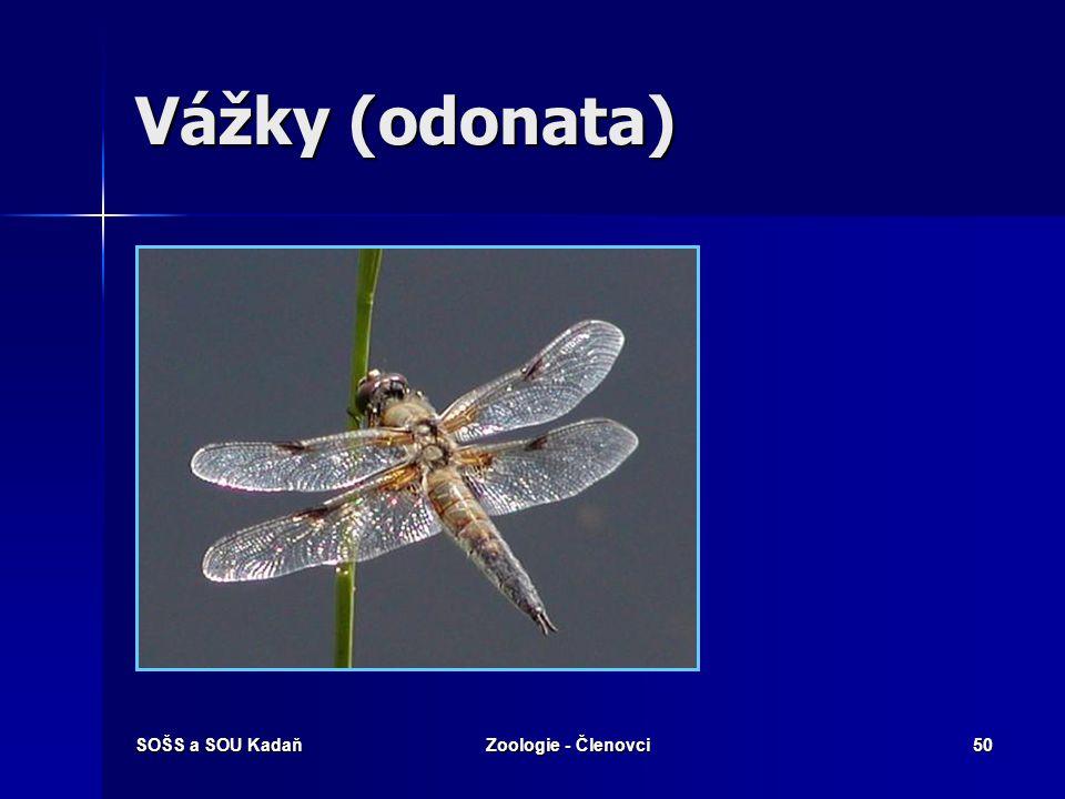 Vážky (odonata) SOŠS a SOU Kadaň Zoologie - Členovci