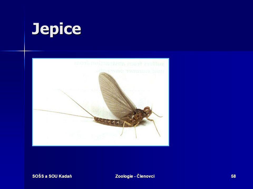Jepice SOŠS a SOU Kadaň Zoologie - Členovci