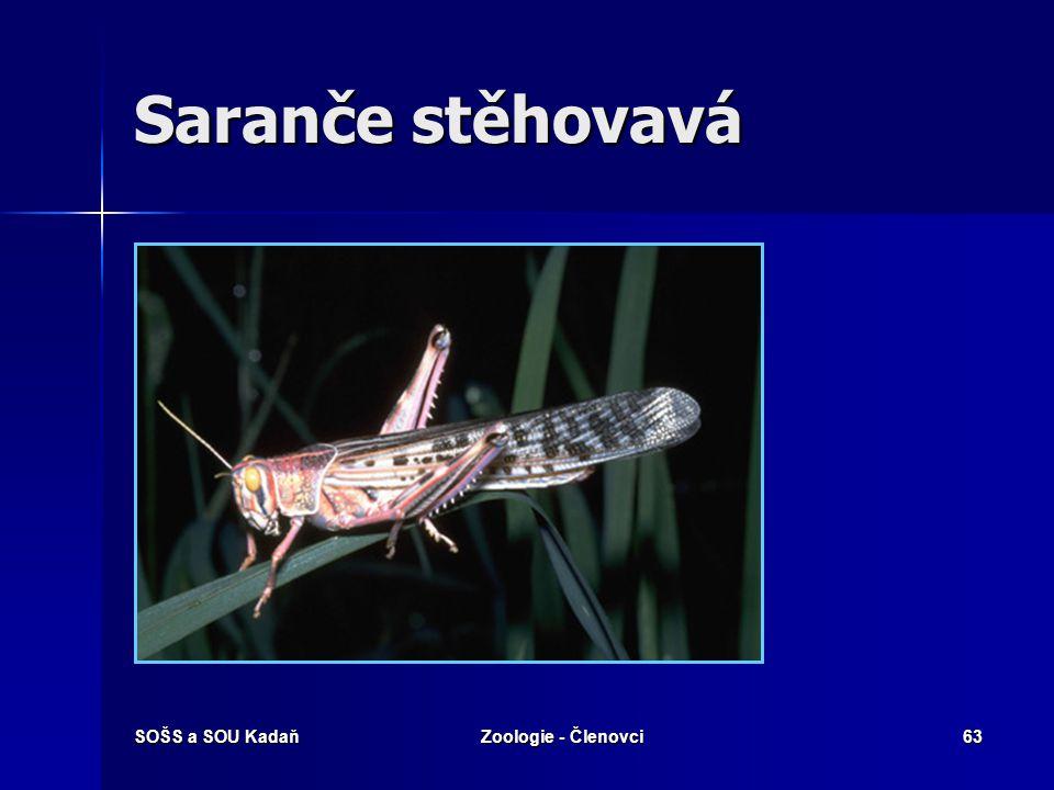 Saranče stěhovavá SOŠS a SOU Kadaň Zoologie - Členovci