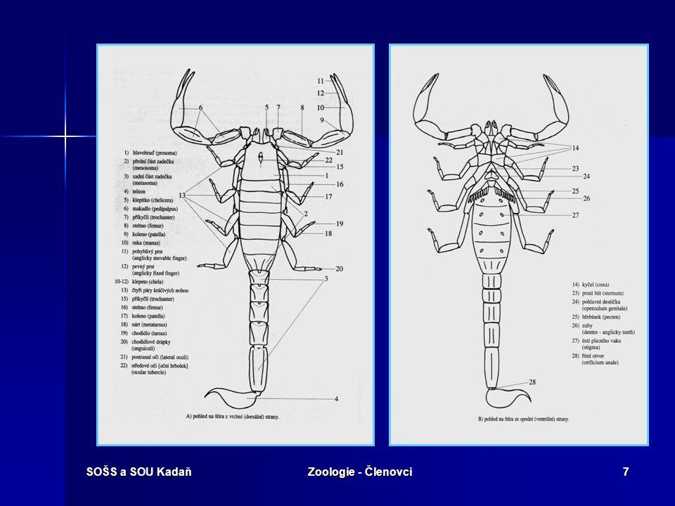 SOŠS a SOU Kadaň Zoologie - Členovci