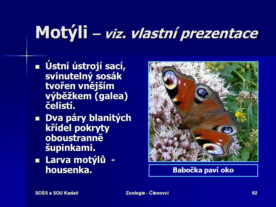Motýli – viz. vlastní prezentace