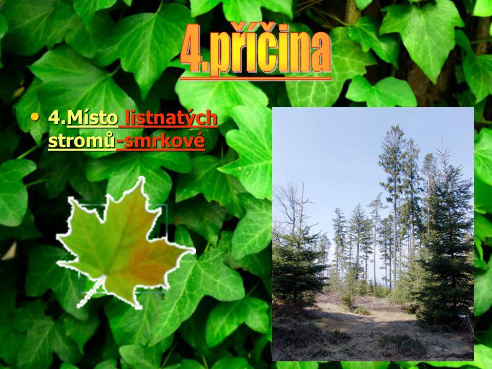 4.příčina 4.Místo listnatých stromů-smrkové