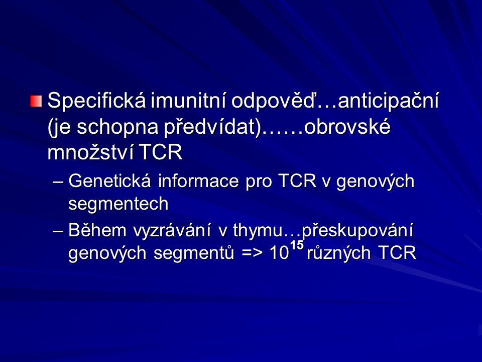 Specifická imunitní odpověď…anticipační (je schopna předvídat)……obrovské množství TCR