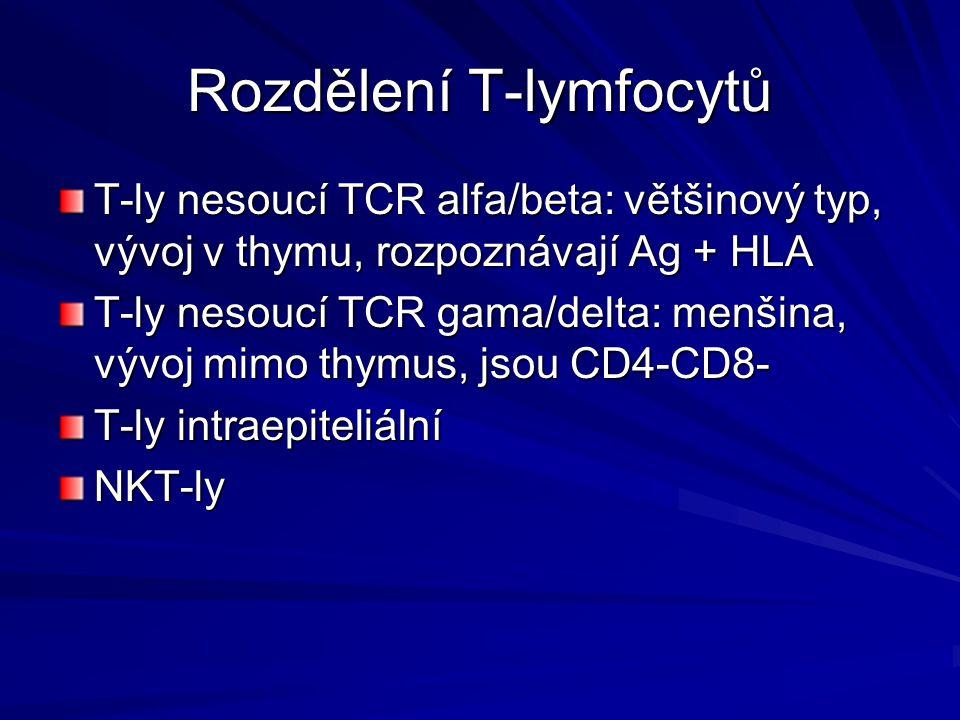 Rozdělení T-lymfocytů