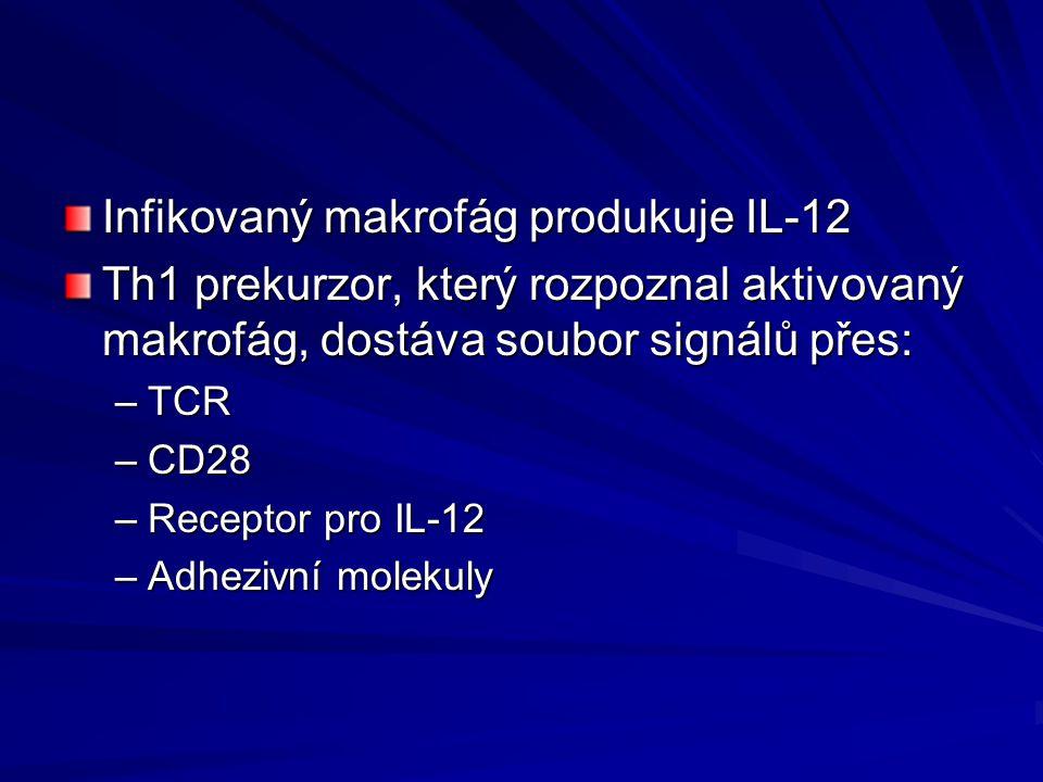 Infikovaný makrofág produkuje IL-12
