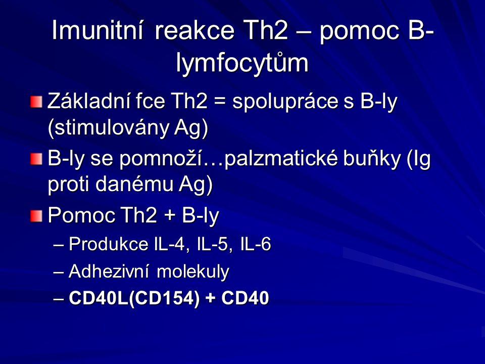 Imunitní reakce Th2 – pomoc B-lymfocytům